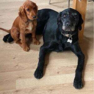 Vores 2 dejlige hunde